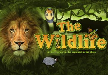The Wildlife