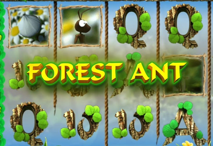 Forest Ant